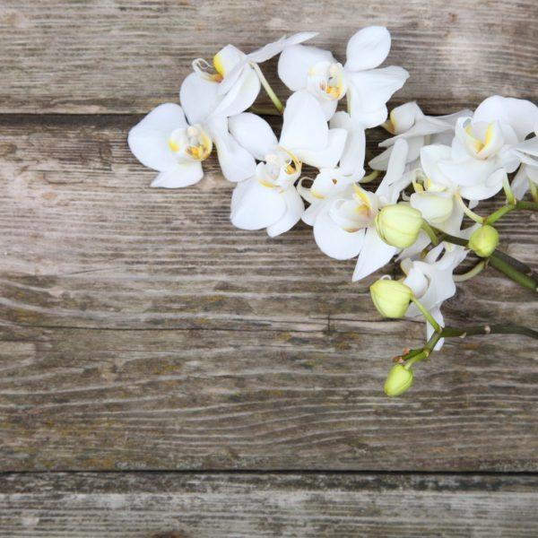Flower Yoga