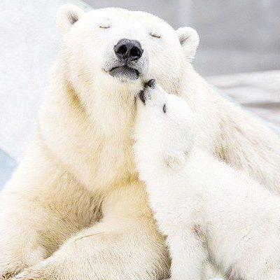 Little Yoga Bears