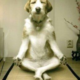 Yoga Energizer