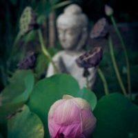 H.E.A.L-main-image-lilac-buddha-resized