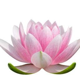 Lotus-Flower-logo-1