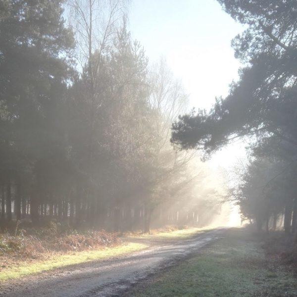 SunlightOnTrees-1