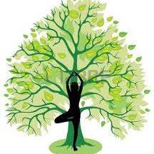tree-image-for-advertising-Yoga-kind.jpeg